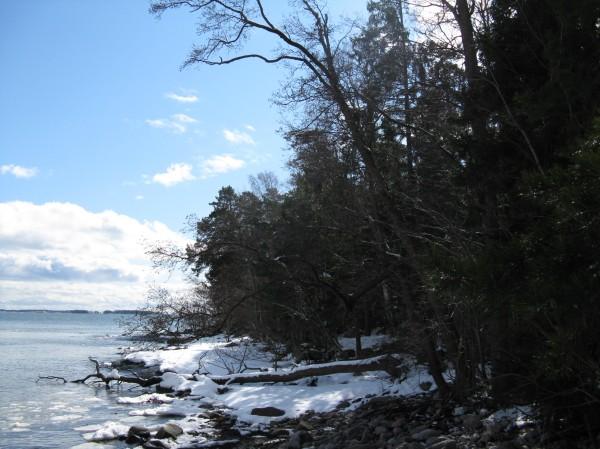 Sipoon Stora Korpholmenin rantaa. Kuva: Lauri Kajander