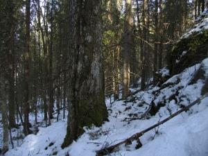 Järeää haapaa ja eri-ikäistä puustoa Tooppikalliolla. Kuva: Tiina Jalkanen, Juho Kytömäki ja Jere Nieminen.