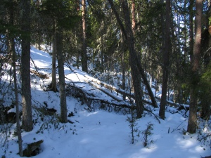 Runsaslahopuustoista metsää Tooppikalliolla.