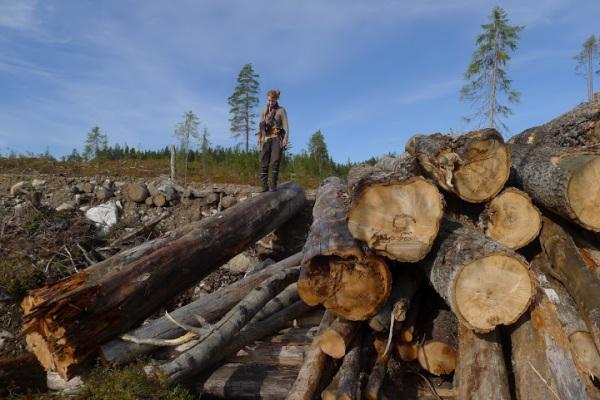 Hakkuujälkeä Maksimjärvensalolla, mittatikkuna kirjoittaja. Kuva: Olli Manninen