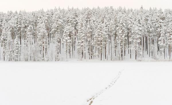 Tämä Kevätinlammen pohjoisranta on kokonaan leimikkoa. Keskelle kuvaa on tulossa avohakkuu.