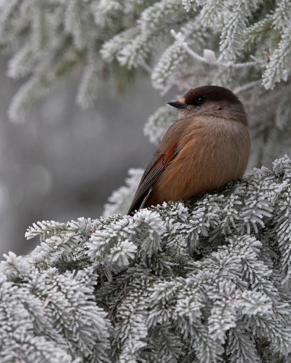 Laajoja yhtenäisiä metsäalueita tarvitseva kuukkeli on uhanalainen Etelä-Suomessa. Haarikon alue on viimeisiä eteläisiä kuukkelin pesimämetsiä.