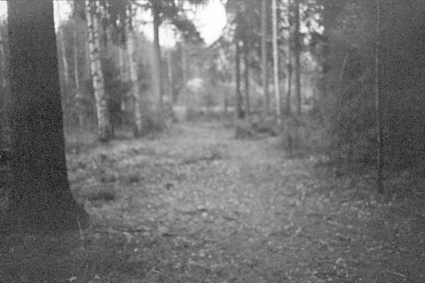 Levein metsän läpi kulkevista poluista marraskuussa 2012. Kuva: Emilia Pippola.