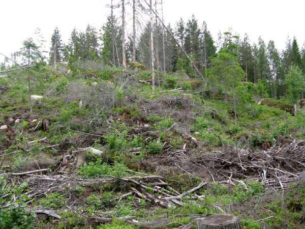 Vuonna 2011 Suomessa avohakattiin 109 000 hehtaaria metsää.