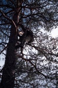Dennis puussa.