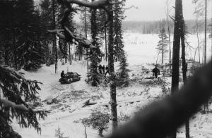 Kuvaaja Jan Kunnas istui puussa Heinosenahon hakkuita estämässä 21.2.1989.