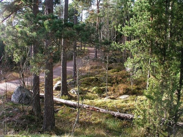 Ulkoilutie Meri-Rastilan metsässä. Kuva: Olli Manninen
