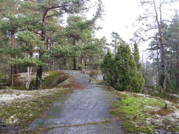 """""""Helsingin luontotietojärjestelmän mukaan yli puolet Vartiosaaren pinta-alasta on arvokkaita luontokohteita (kasvillisuus, metsät, geologia, linnusto), minkä lisäksi koko saari on luokiteltu tärkeäksi lepakkokohteeksi."""""""