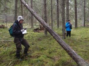 Hanna Jauhiainen merkitsee muistiin konkelolla kasvavan punahäivekäävän, joka on vanhan metsän indikaatorilaji.