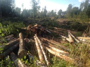 Metsähallitus-Isosaari-2