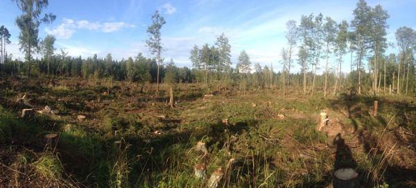 Metsähallitus-Isosaari-3