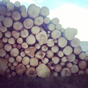 Metsähallitus-Isosaari