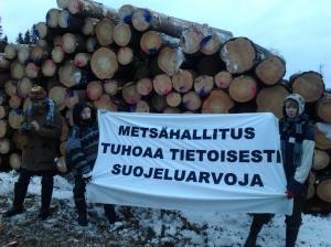 Mielenosoittajia Metsähallituksen hakkuulla Keuruulla 17.1.2015.