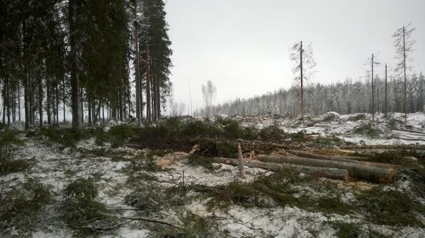 Kun puolustusvoimilla vuosikymmeniä säilynyt vanha metsä päätyy Metsähallituksen haltuun, näky on lohduton.