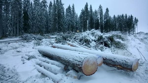 Metsähallitus panee sileäksi Etelä-Suomessa huippuharvinaista 150 - 220-vuotiasta metsää.