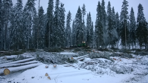 Metsähallitus parturoi metsää, jonka puista osa on kasvanut paikallaan Ranskan suuren vallankumouksen ajoista asti.