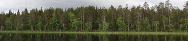 Pesiöjärven Honkasaari, johon Metsähallitus suunnittelee rannasta rantaan ulottuvia harvennushakkuita. Kuva: Greenpeace