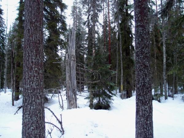 Lehtosaaren monimuotoista metsää. Taka-alalla näkyvä keltainen nauha on tielinjan merkki.