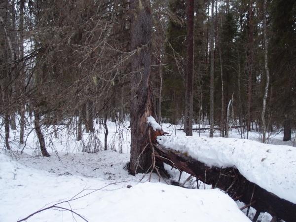 Lehtosaaren metsää.