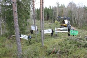 Kuva: Hanna Savisaari