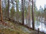 Paiholan metsän yleisilmettä