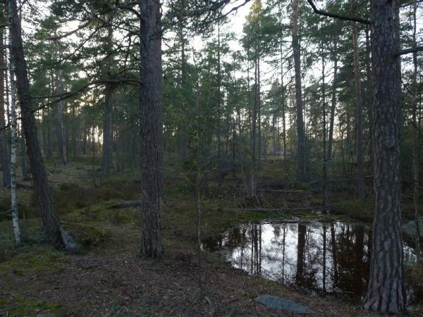 05-karhunkaatajan-metsa_myllypuro_oma
