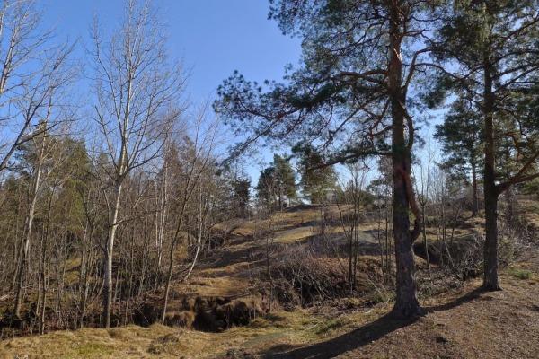 07-pihlajamaen-metsat_oma