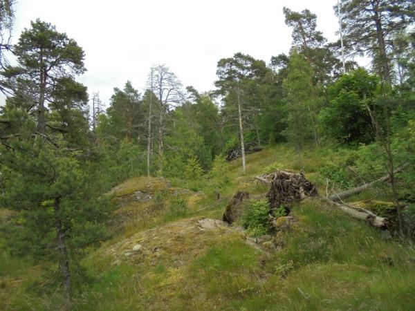 11_Kruunuvuoren-metsä_OMa.JPG