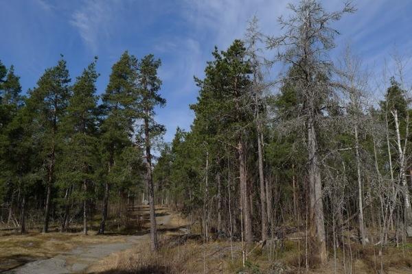 18-Aku-Korhosen-tien-metsä_Pohjois-Haaga_OMa.JPG