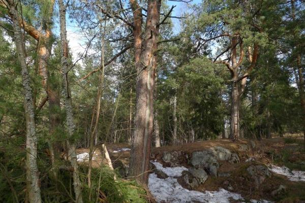 22-Veräjämäen-metsät_OMa.JPG