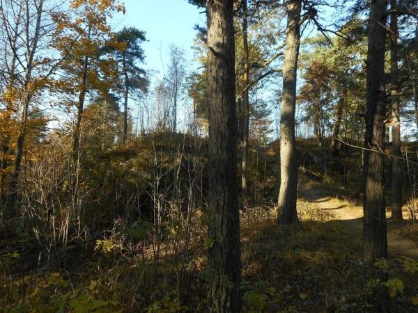 26-Koskelan-metsä_OMa.JPG
