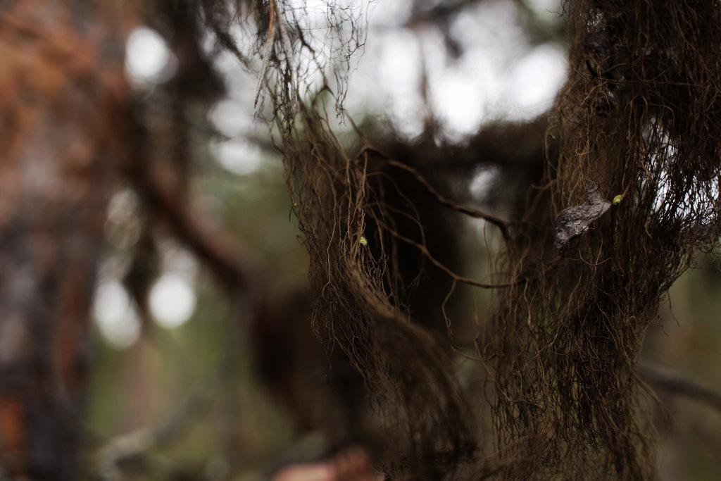 Lauran metsäsuhdeblogin kuva 2