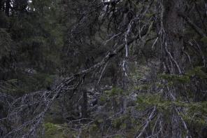 Lauran metsäsuhdeblogin kuva 3
