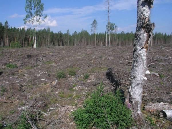 Ilomantsi Valkeajärven Natura-suojelua_OMa